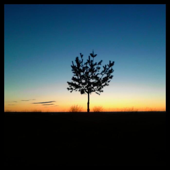 Little tree.Ryynänen.2014