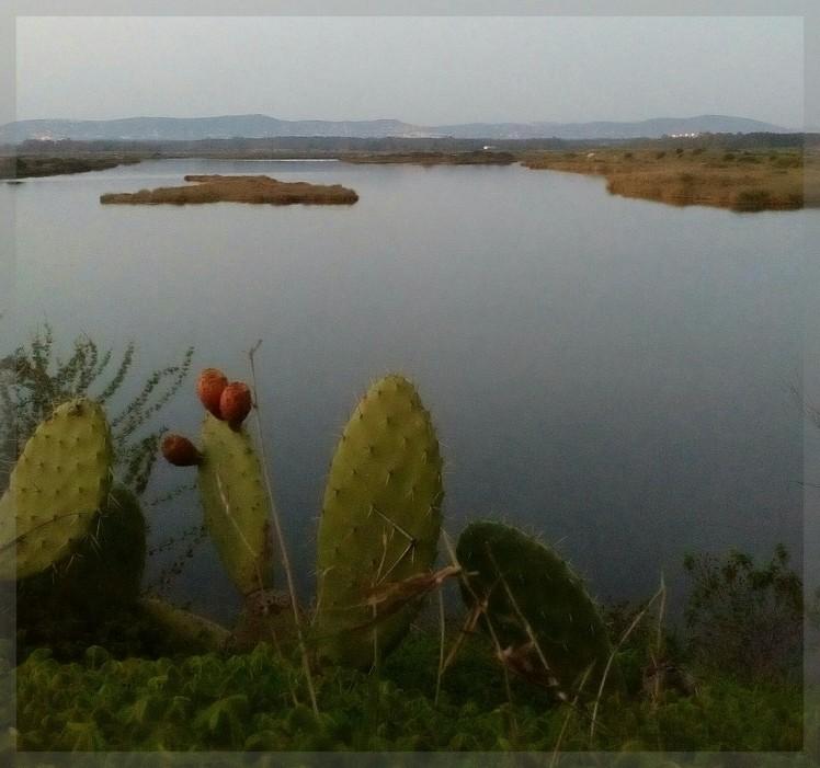 TIDE:Cactus.Faro.Portugal.2015.Camera:Lenovo